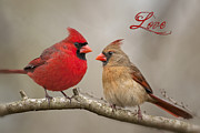 Red Birds Framed Prints - Love Framed Print by Bonnie Barry