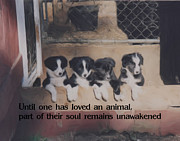 Collies Digital Art Posters - Love For Animals Poster by Smilin Eyes  Treasures
