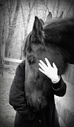 Friesian Prints - love from a Friesian Print by Kim Galluzzo-Wozniak