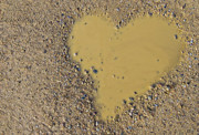 Puddle Metal Prints - Love In A Muddy Puddle Metal Print by Meirion Matthias