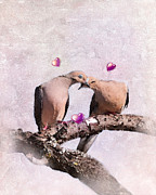 Mourning Dove Posters - Love in the Afternoon Poster by Betty LaRue