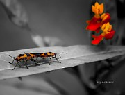 Milkweed Photos - Love in the Afternoon by DigiArt Diaries by Vicky Browning