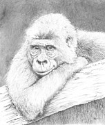 Gorilla Drawings - Love in the Mist by Carol McLagan