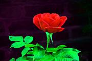 Macro Digital Art - Love is a Rose by Bill Cannon