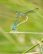 Mating Animals Photos - Love Is In The Air by Andy Teo aka Photocillin