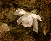 Gardenia Photos - Love Letter IX Cape Jasmine Gardenia by Jai Johnson