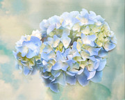 Love Letter Vii Hydrangea Print by Jai Johnson