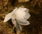 Gardenia Photos - Love Letter VIII Cape Jasmine Gardenia by Jai Johnson