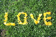 Communication Photos - Love Spelt Out With Flowers by G Fletcher
