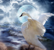 Swan Art Prints - Love Swept Print by Carol Cavalaris