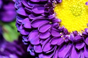 Floral Photographs Photos - Love The Purple Flower by Christy Patino