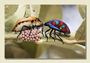 Stink Bug Digital Art - Love you babe 01 by Kevin Chippindall