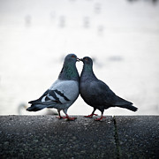 Animals Photos - Lovebirds by Oscar Bjarnason