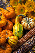 Gourds Posters - Lovely autumn Poster by Garry Gay