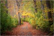 Mikki Cucuzzo Metal Prints - Lovely Autumn Metal Print by Mikki Cucuzzo