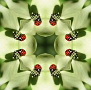 Ladybug Mixed Media Acrylic Prints - Lovely Ladybug Kaleidoscope Acrylic Print by Smilin Eyes  Treasures