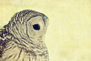 Brown Tones Prints - Lovely Lucy Barred Owl Print by Stephanie McDowell