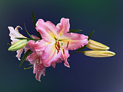 Lovely Pink Lilies Print by Susan Savad