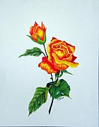 Bud Drawings Posters - Lovely Rose Poster by Terri Mills