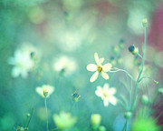 Wildflower Photos Prints - Lovestruck Print by Amy Tyler