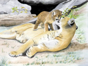 Mountain Lion Paintings - Loving Moment by Joette Snyder