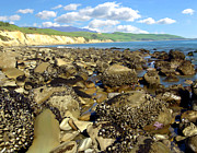 Seashore Digital Art Metal Prints - Low Tide At Gaviota Metal Print by Kurt Van Wagner