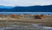 Powell River Metal Prints - Low Tide on Savary Island BC Metal Print by Marion McCristall