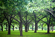 Park Scene Photos - Low Trees In Flushing Meadows-corona Park by Ryan McVay