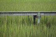 Lowcountry Framed Prints - Lowcountry Dock Over Marsh Grass Framed Print by Dustin K Ryan