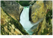 Grand Canyon Of The Yellowstone Photos - Lower Falls by Greg Norrell