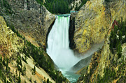 Grand Canyon Of The Yellowstone Prints - Lower Falls no border or caption Print by Greg Norrell