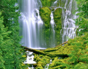 Willamette Framed Prints - Lower Proxy Falls Framed Print by Ed  Riche