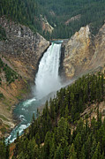 Rainbow River Photos - Lower Yellowstone Falls by Jim Chamberlain
