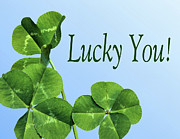 Four Leaf Clover Posters - Lucky You Poster by Kristin Elmquist