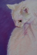 Cat Portraits Pastels Prints - Lucy the cat Print by Gayle  George