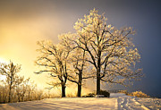 Oak Trees Posters - Luminous - Blue Ridge Winter Sunset Poster by Dave Allen
