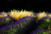 Provence Digital Art Originals - Luminous by John Galbo