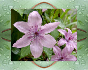 Flower Photos Framed Prints - Luminous Mauve Framed Print by Bell And Todd