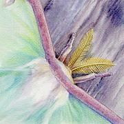 Luna Moth Drawings - Luna Moth by Mindy Lighthipe