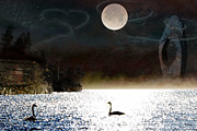 Swans... Prints - Lunar Visions Print by Ed Hall