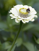 Bee Metal Prints - Lunch Metal Print by Rebecca Cozart