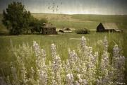 Old Barns Mixed Media Posters - Lupine Homestead Poster by Melisa Meyers