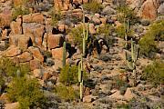 Southwest Landscape Metal Prints - Lush Arizona Desert Landscape Metal Print by James Bo Insogna