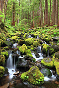 Olympic National Park Prints - Lush Creek Olympic National Park Print by Pierre Leclerc