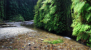 Fresh Air Framed Prints - Lush Fern Canyon Framed Print by Pierre Leclerc