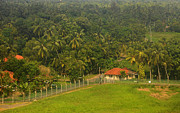 Red Roof Photos - Lush Green. Sri Lanka by Jenny Rainbow