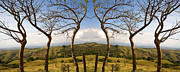 Dead Trees Prints - Lush Land Leafless Trees III Print by Madeline Ellis