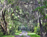 Mossy Trees Prints - Lush Lane Print by Al Powell Photography USA