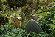 Old Objects Prints - Lush Plants Grow Around Old Tombstones Print by Jim Richardson