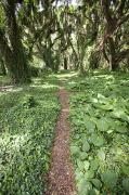 Forest Floor Photos - Lush Rainforest Path by Jenna Szerlag